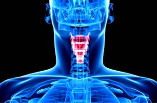 Из чего состоит горло человека